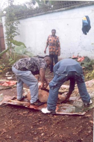 "Slaughtering a pig for the ""Sassa"""